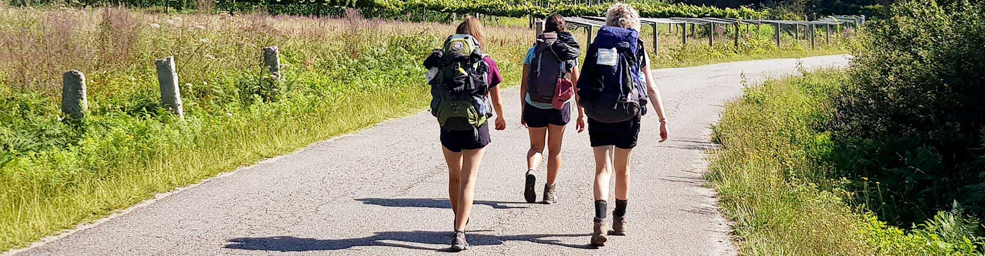 pilgrims walking along the camino